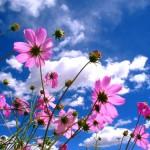 Gesang flower
