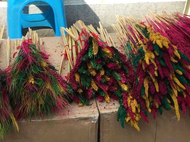 Colorful wheatears