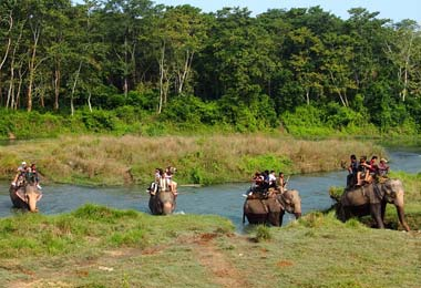 Elephant safari is one of the most popular and major program activities in Chitwan National Park.