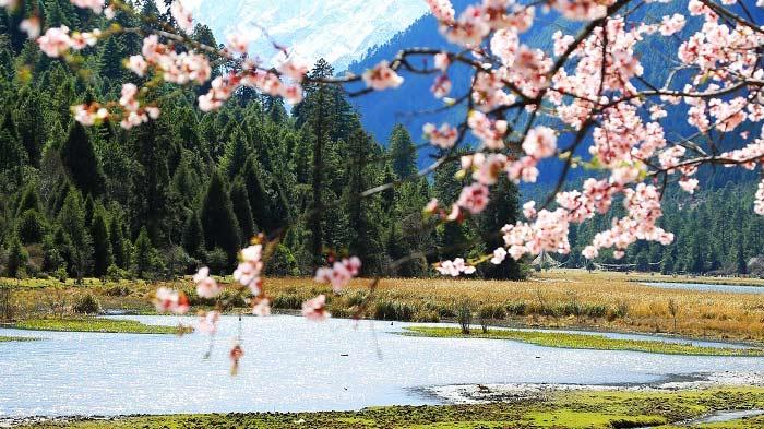 Nyingchi Peach Blossom Festival - Milin County