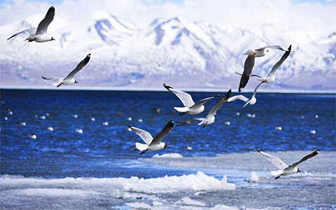 Birdwatching Tour Routes in Tibet