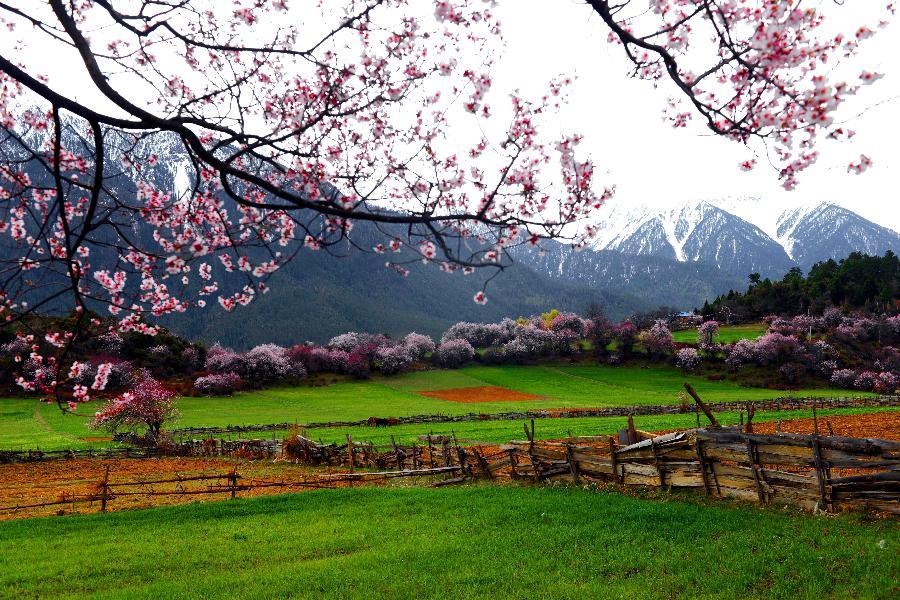 Beautiful Scenery Of A Mountain Village In Tibet Tibet Travel Blog