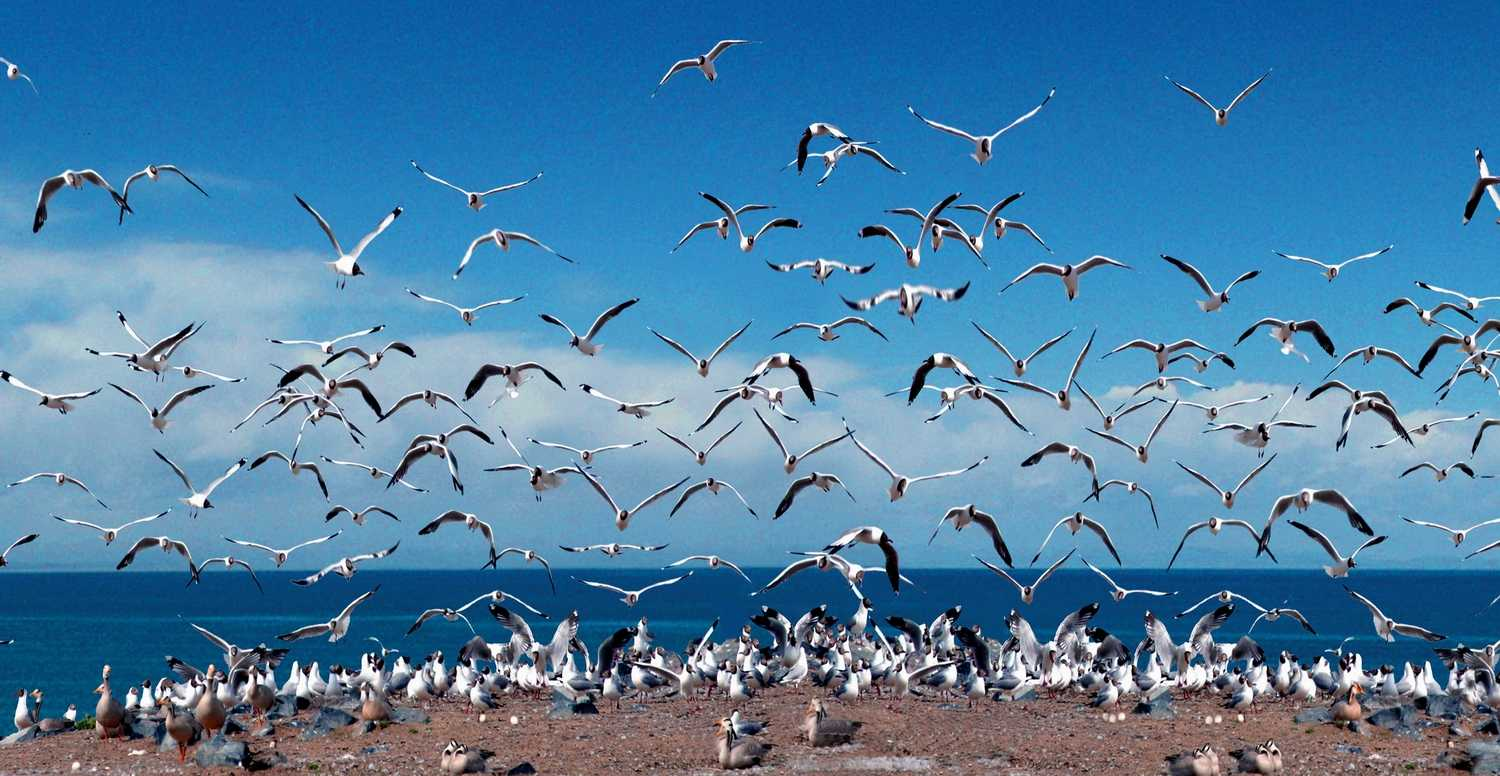 Qinghai Lake Embraces Bird-Loving Week