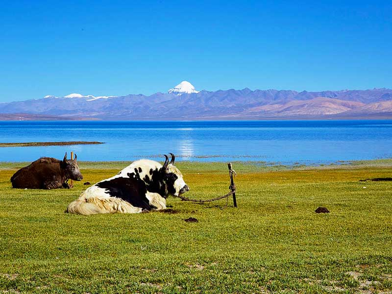 The highest body of freshwater - Manasarovar