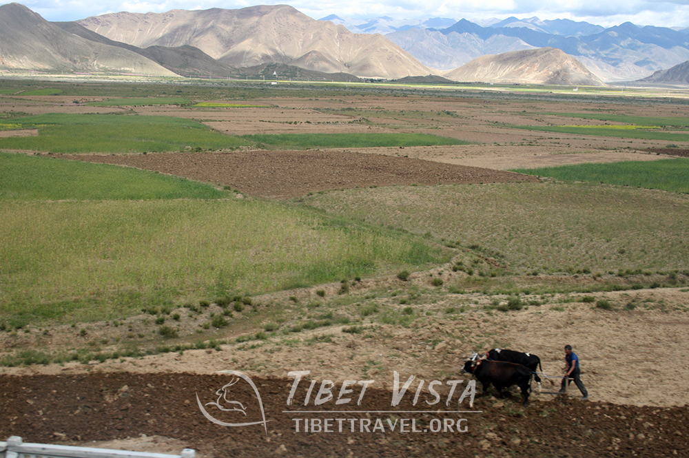 farming view of Lhasa-Shigatse Railway