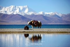Make a Responsible Tibet Tour