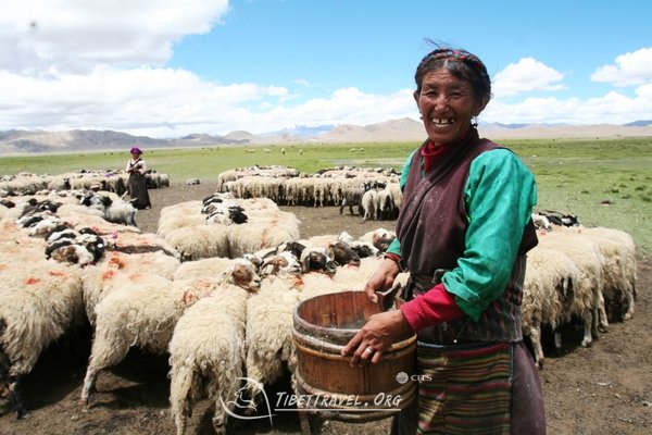 tibetan nomads in northern Tibet
